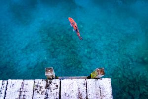 سمك زينه يتنفس الهواء