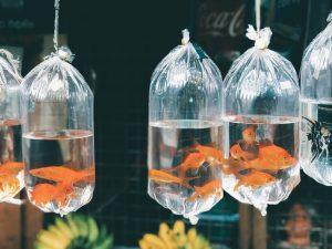 كيفيه العنايه بحوض سمك الزينه الصغير