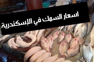 اسعار السمك في الاسكندرية اليوم 2019