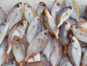 سعر كيلو سمك البربون