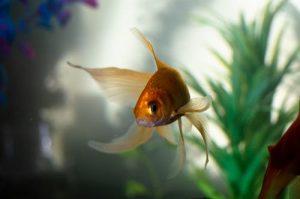 لماذا يموت السمك في الحوض