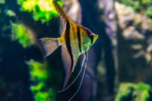 سبب موت السمك في الحوض