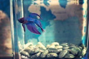 سبب صعود السمك الي سطح الماء