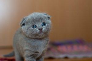 هل تربية القطط في المنزل تسبب العقم عند البنات والشباب