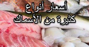 اسعار السمك فى سوق العبور اليوم