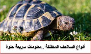 افضل انواع السلاحف للتربية المنزلية واسعارها